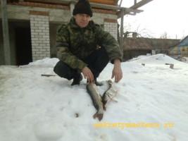 Щука зимой