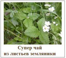 Чай из листьев земляники